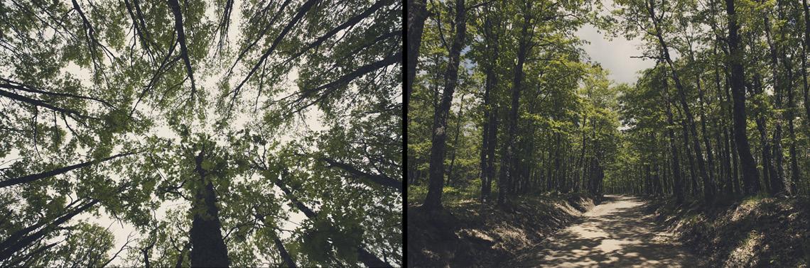 basilicata natura alberi bosco