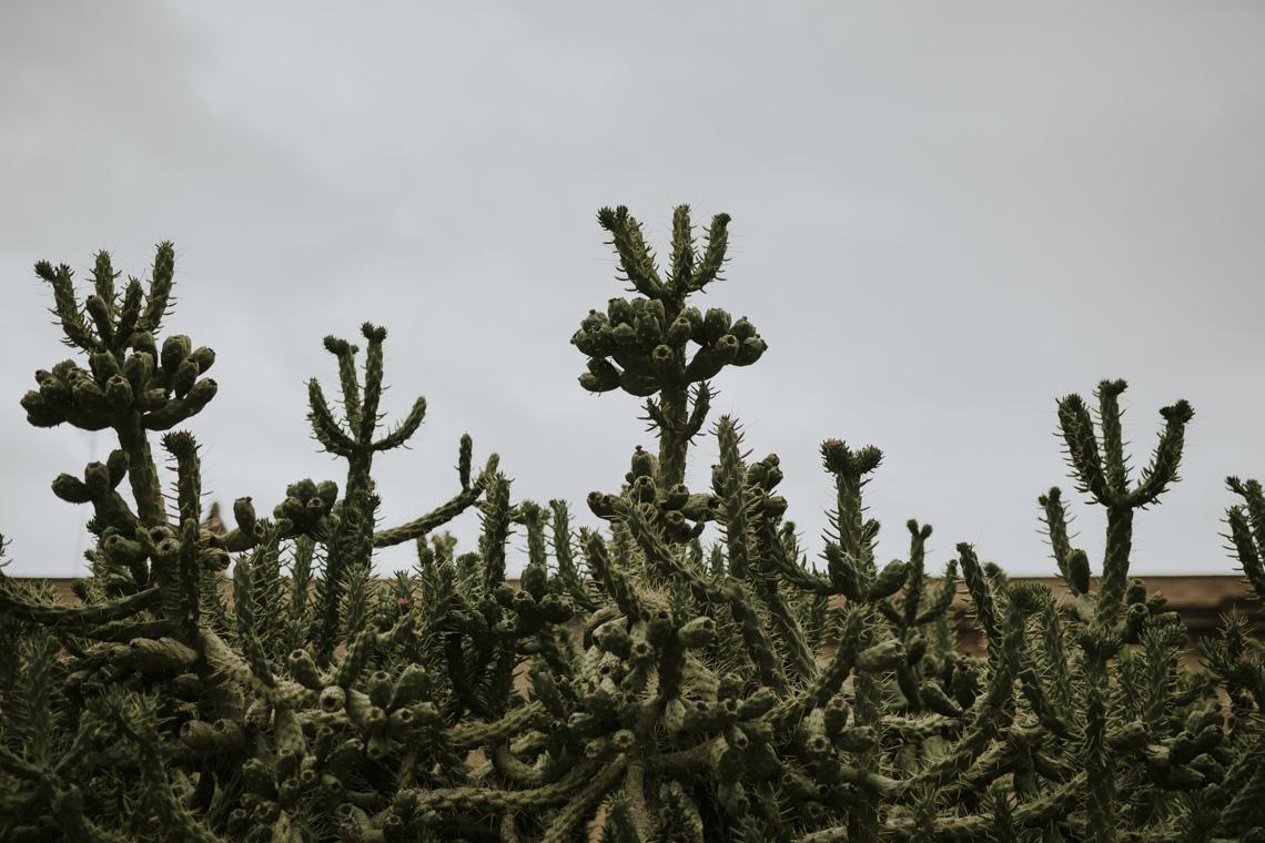 cactus tenuta visconti