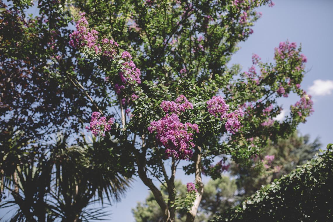 viola fiori agosto matrimonio