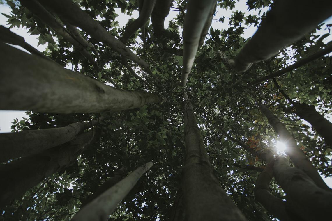 alberi tree sun sunlight luce sole