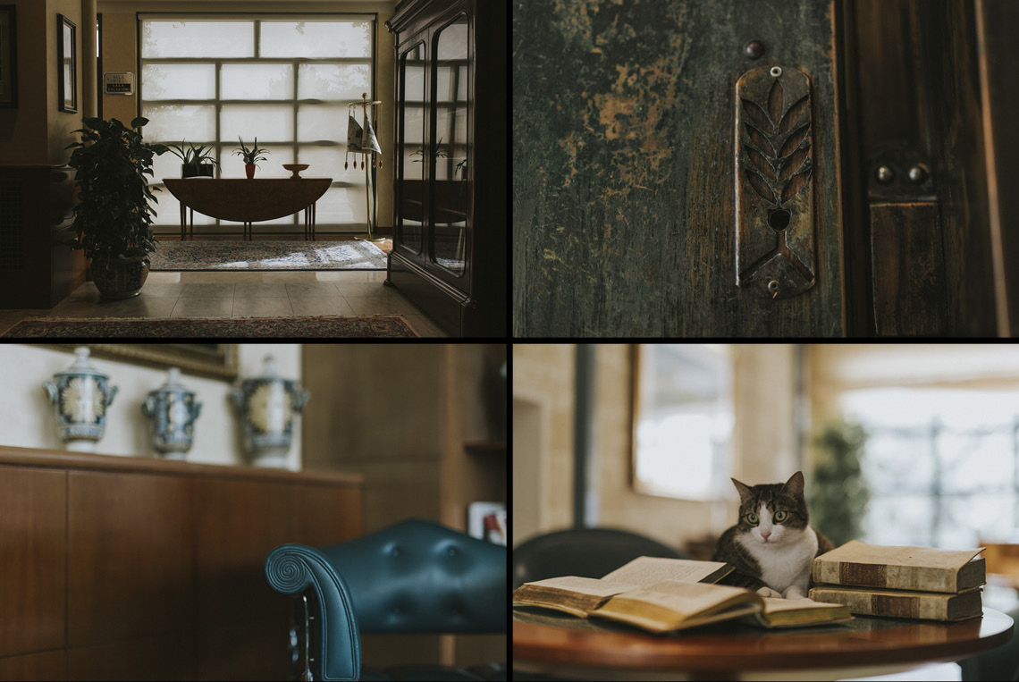 dettagli chat gatto animal ammessi