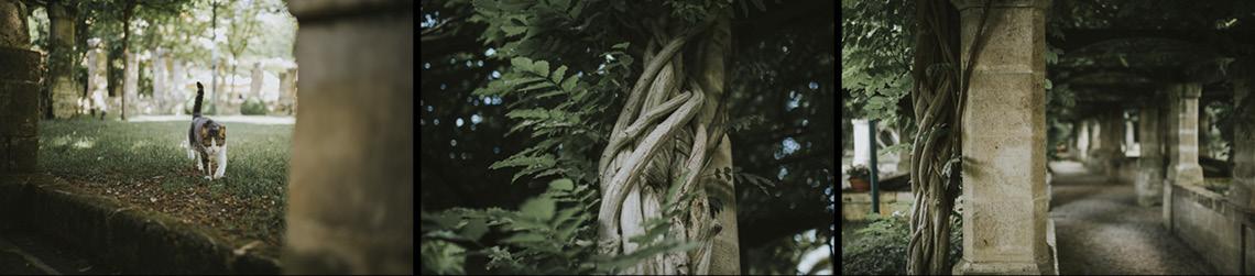 garden tree albero radice gatto hotel