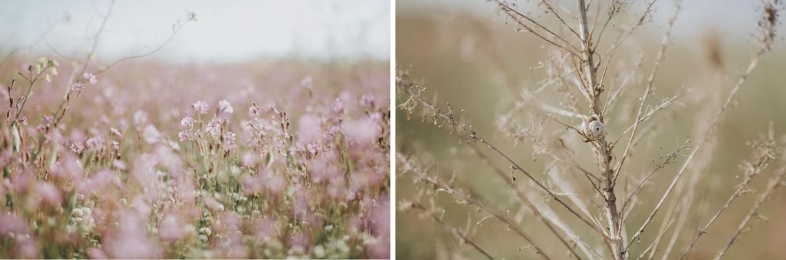 spring primavera flowers fiori pink nature nature