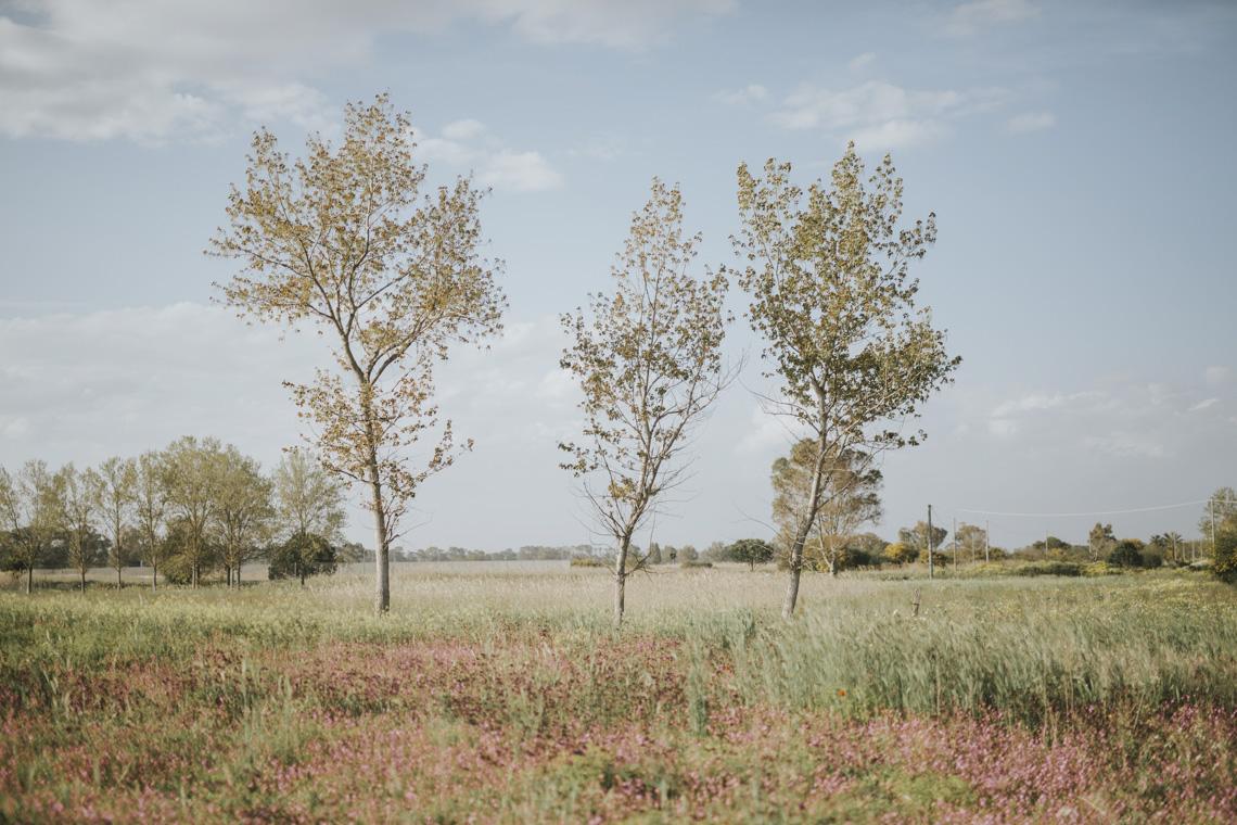 tree alberi spring landscape paesaggio